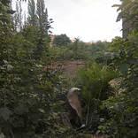 spolkova-marxova-thc-harlem-2015-07-001